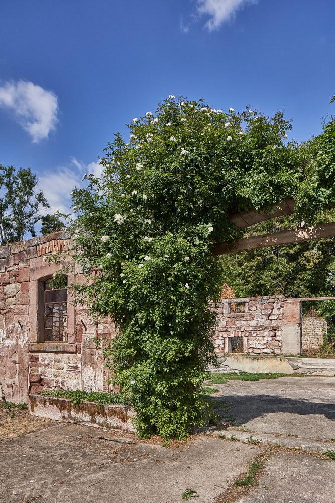Rittergut von Wangenheim Waake • ©Rald König